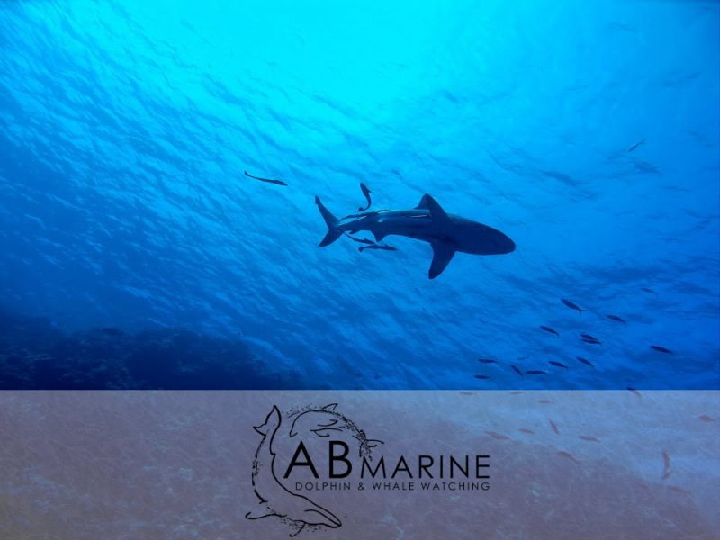 Sharks in Cape Town