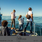 Algoa Bay Killer Whales