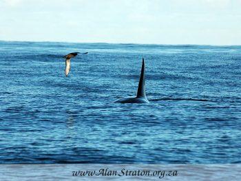 AB Marine – Algoa Bay Marine Charters Whale Watching Port