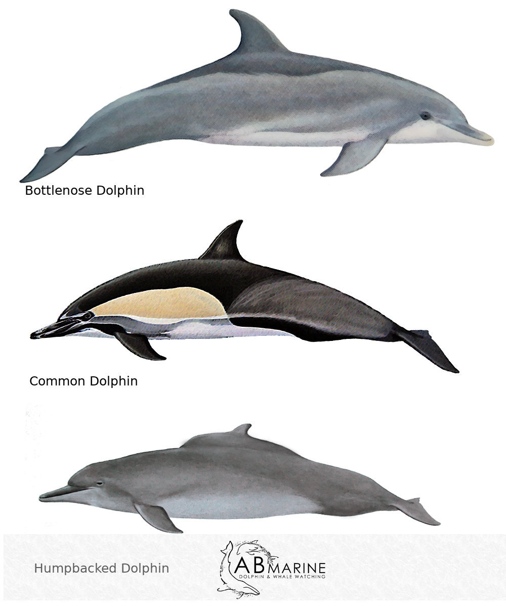 Dolphin Identification - Algoa Bay